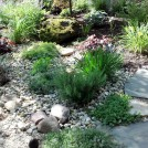 Scented steppers (plants) add fragrance when you walk along the stones