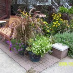 Colorful Front Garden