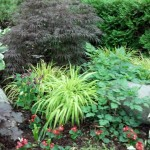 Great Shade Combo with Japanese Maple, Hosta, Columbine and Hakone Grass