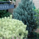 Great Color Combo with Briggs Moonlight Daphne and Witchita Blue Juniper and Yellow Brick
