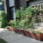 Black Locust Raised Beds and R-Bar Trellis