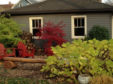 Great Fall Combo: Japanese Maple, Endless Summer Hydrangea and Firewood