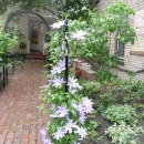 Wrought Iron Arbors with Clematis