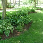 Scavenged Hostas Usurped Lawn In a Curvy Bed On This Parkway, and are just lovely.