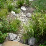 Rain Garden Includes Oehme Sedge